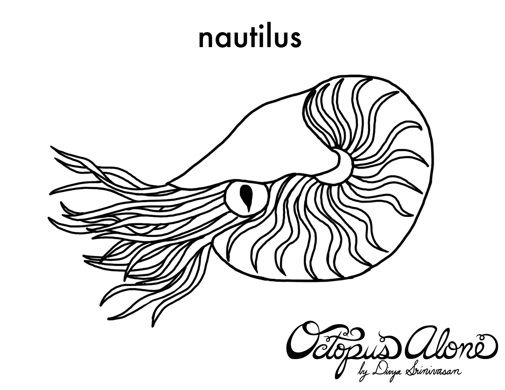 Gallery For gt Nautilus Drawing